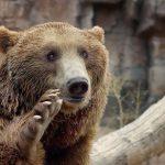 Darıca Hayvanat Bahçesi Nerede ve Nasıl Gidilir ve Tanıtımı?
