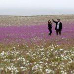 Atacama Çölü Nerede, Nasıl Gidilir?